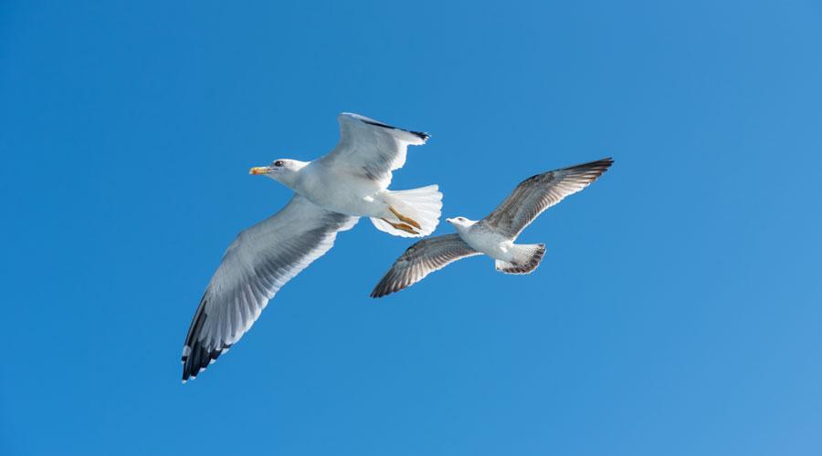 Día mundial de las aves. Iniciativas Centro Santa Bárbara